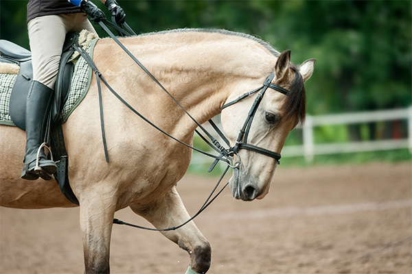 Marietta, GA Equestrian Stables